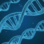 ハゲ遺伝子は本当にあるの?