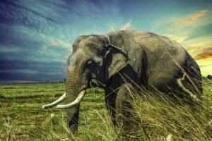 elephant-2729415_640