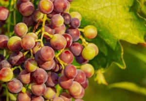 grapes-3555214_640