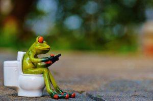 frog-914520_640