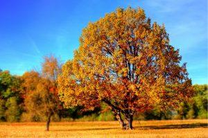 tree-99852_640