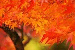 autumn-leaves_00040